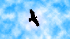Avatar di FreeBird